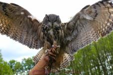 Middeleeuws festival en roofvogelshow 2012-113